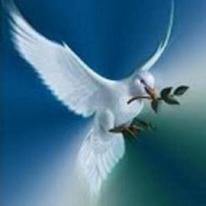 Photos for Peace