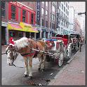 Boston Guides
