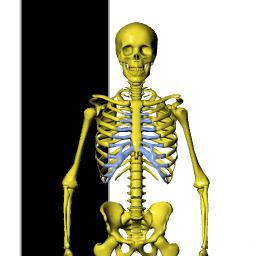 Visual Bones