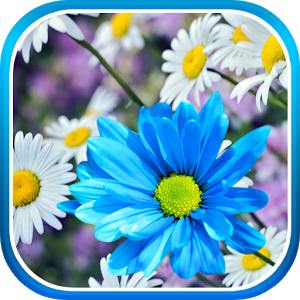 Daisies Flowers Live Wallpaper