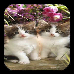 CAT FUNNY CUTE WALLPAPERS