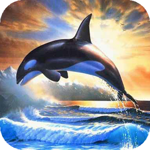 Dolphin Flew Up Live flew love racing