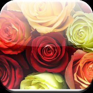 Colorful Flower HD Wallpaper