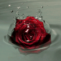 Floating Rose Live Wallpaper