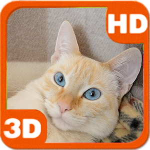 3D Awakened Cute Cat at Home