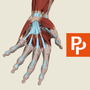Forearm and Hand: 3D RT - Sub