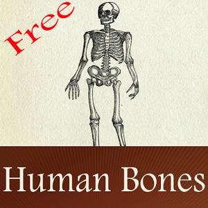 Human Bones learn free