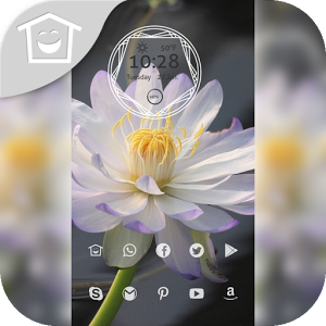 Beautiful white lotus theme