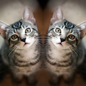 Mirror ImageEditor