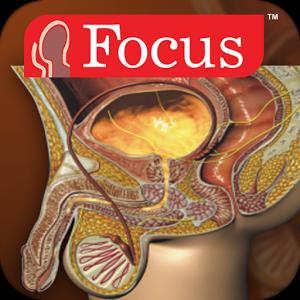 Urology - Medical Dictionary