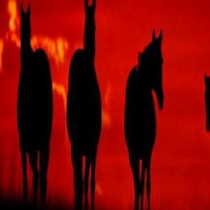 Sunset Horses LWP Pro