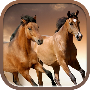 Horses slideshow & Wallpapers
