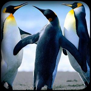 Penguins Wallpapers penguins