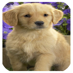 DOG CUTE WALLPAPERS