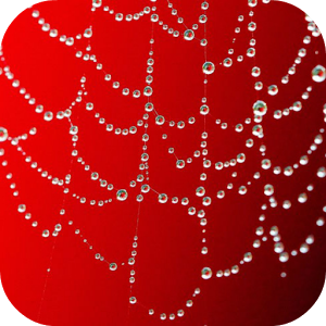 Water Drops Live Wallpapers