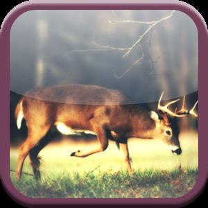 Deer Forest Hunt 2014