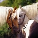 Horses photo II
