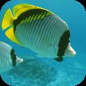Deep Sea Fishing Master