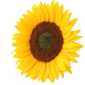 Battery Widget Flower Widget widget
