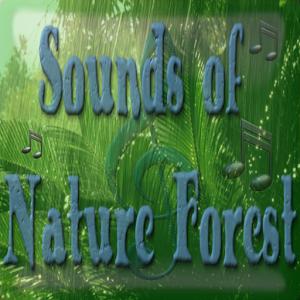 Nature Forest Sound & Ringtone