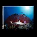 SharkAquarium liveWall Full