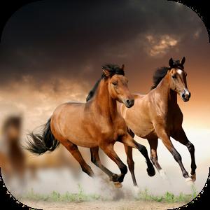 Horses HD Live Wallpaper