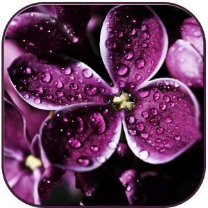 Raindrops on lilac friendship minecraftwiki raindrops