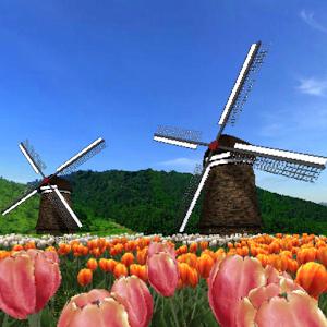 Tulip Fields 360°