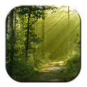 Free Green Forest LWP