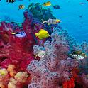 Ocean Aquarium Live Wallpaper