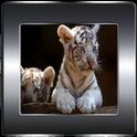 White Tiger Donation Theme