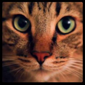 Wonderful Cat Live Wallpaper