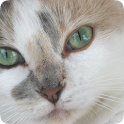 facts about cats eyes