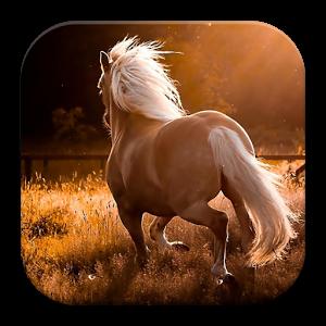Horses Background Wallpaper HD