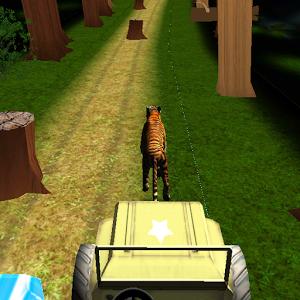 Tiger Runner : Bengal Tiger