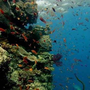ZEDGE Fish Live Wallpaper zedge com