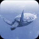 TurtleClock